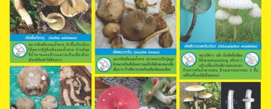 เห็ดพิษในประเทศไทย